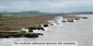 saltmarsh